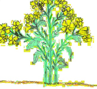 Madhu's Seeds